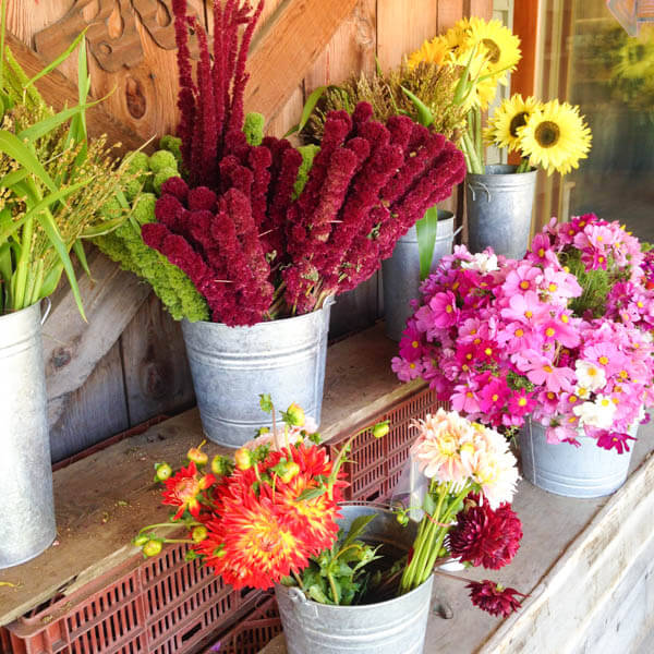 Earthbound Organic Farm Stand Flowers
