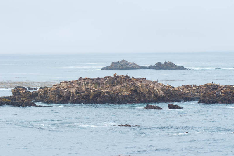 Point Lobos State Reserve, Carmel, California - Sea Lions