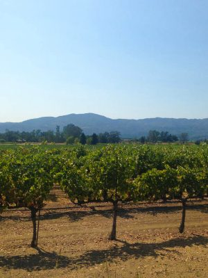 The Best Napa Valley Wineries