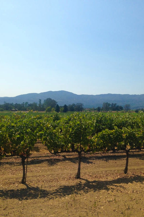 Scribe Vineyards in Sonoma Valley, CA