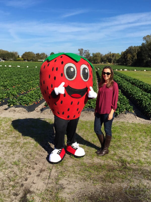 Strawberries and Cream Steel Cut Oatmeal is a big bowl of fresh strawberry flavor! Plus a recap of my time with the Florida Strawberry Grower's Association!