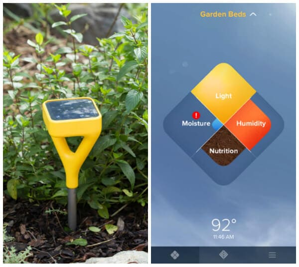 Pineapple Peach Mojito featuring Edyn Garden Sensor