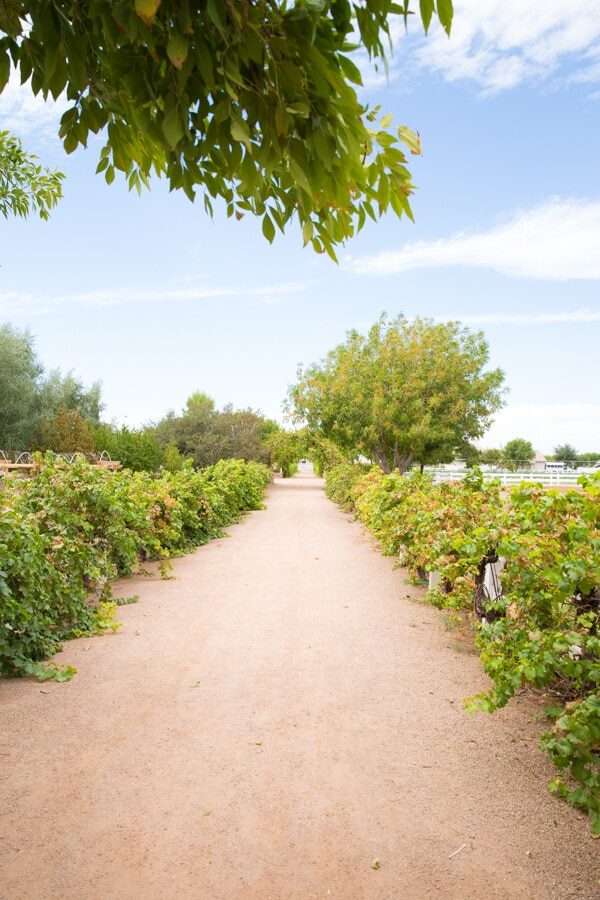 The Best Outdoor Adventures in Phoenix and the surrounding area featuring Agritopia in Gilbert, Arizona and more!