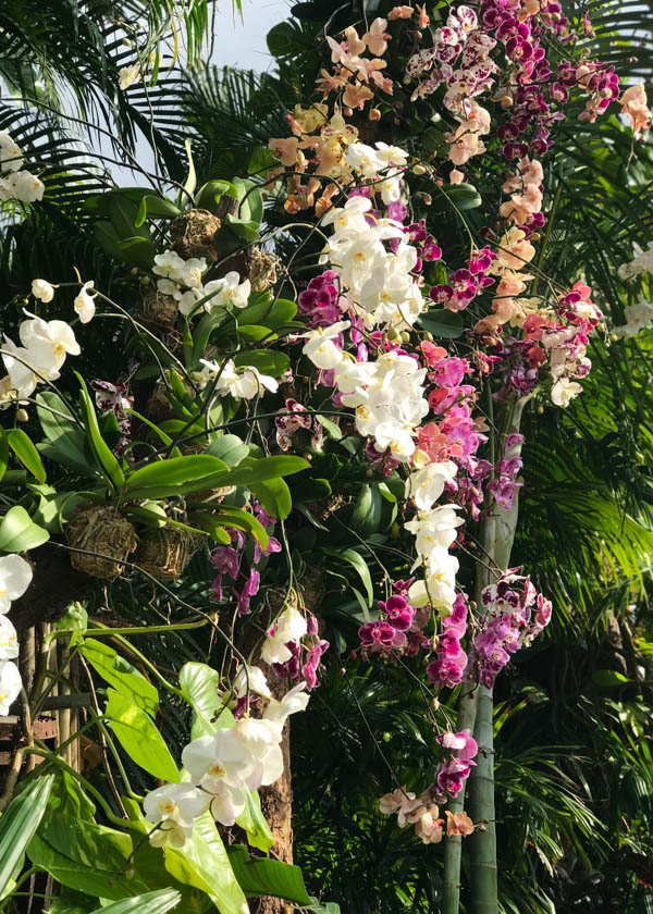 Orchids at Epcot