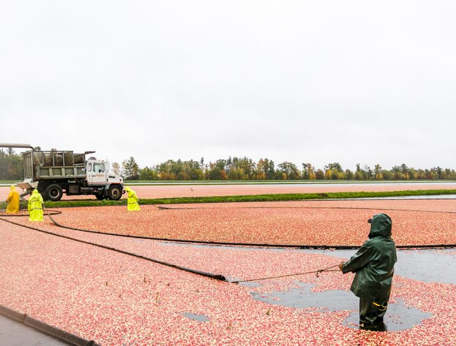 Plan a foodie road trip to Wisconsin featuring the cranberry harvest, unique foodie experiences and Osthoff Resort! Our travel Wisconsin fall road trip includes the best road trip planner for foodies looking to experience a taste of Wisconsin cranberries. #travel #wisconsin #cranberry #harvest #osthoff #travel #roadtrip #luxury #foodie