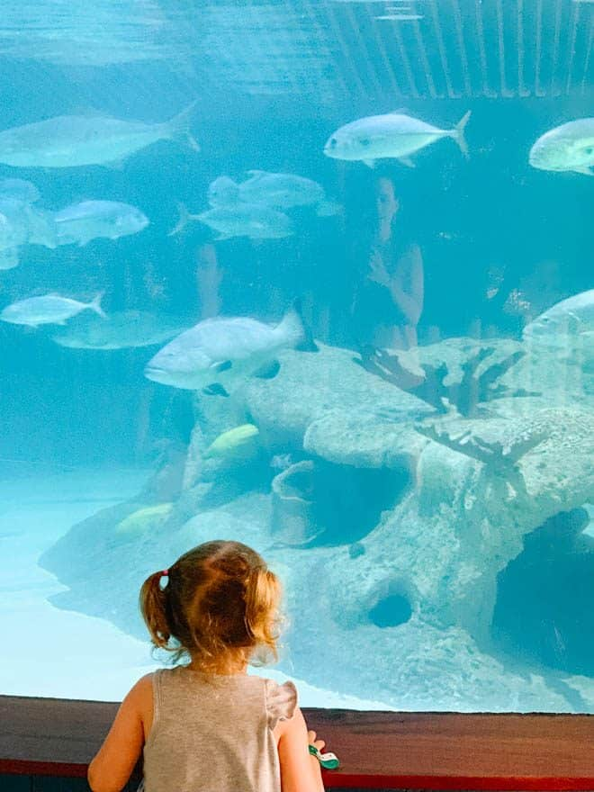 Large fish tank at Aquarium encounters Islamorada.