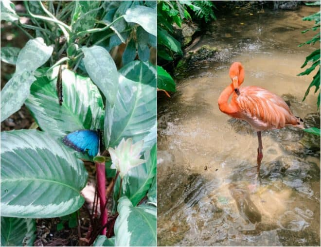 Flamingo and butterfly on a leaf
