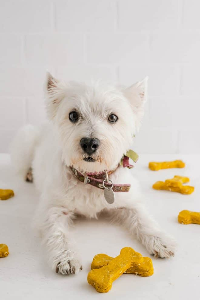 a white dog with two homemade dog treats in front of him