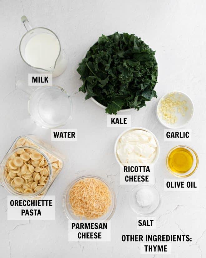 ingredients for orecchiette pasta
